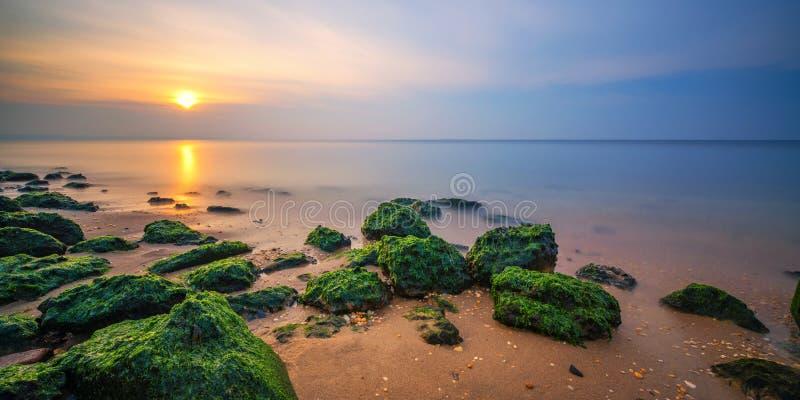 O Seascape com algas cobriu rochas imagens de stock royalty free