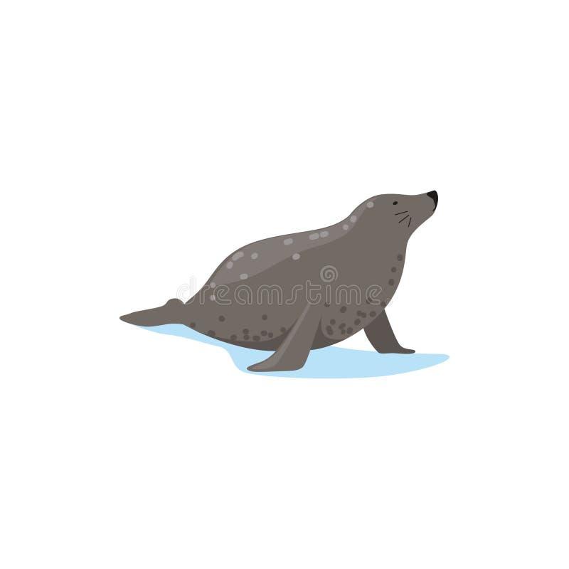 O selo de porto, espécie ártica da fauna vector a ilustração ilustração stock