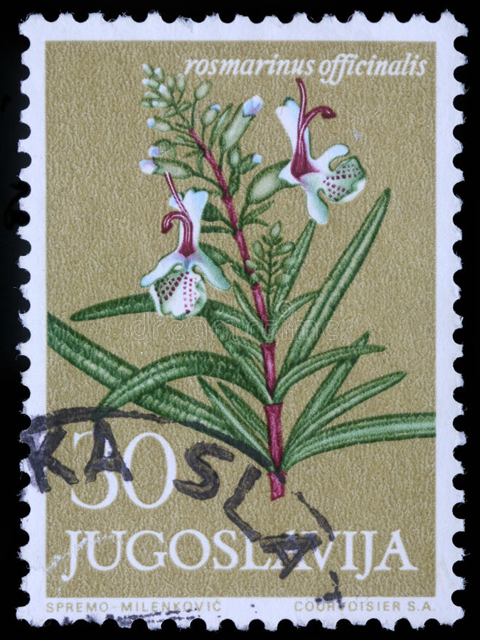O selo impresso em Jugoslávia mostra alecrins foto de stock royalty free