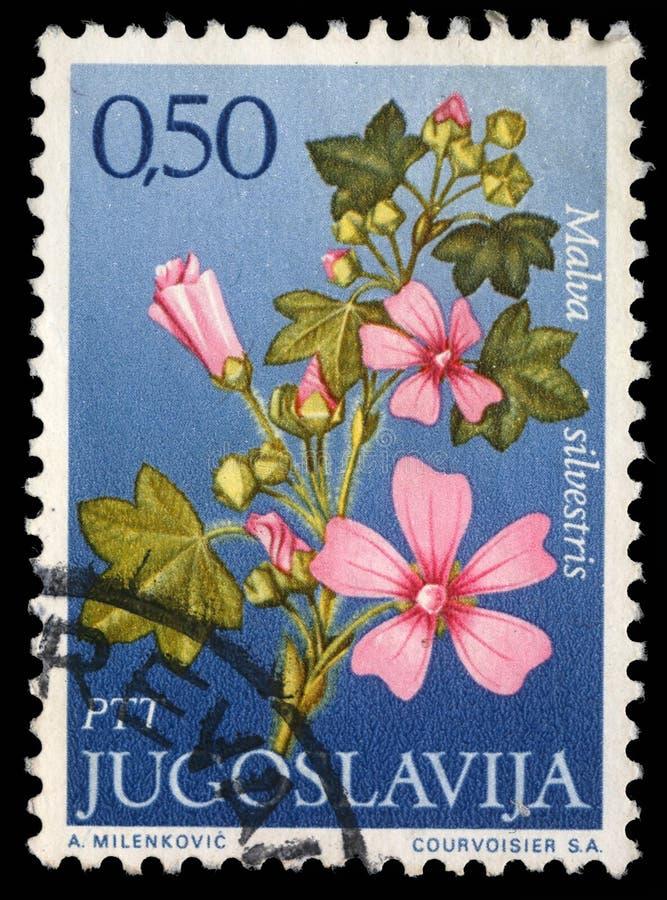 O selo impresso em Jugoslávia mostra o gênero Malva fotos de stock
