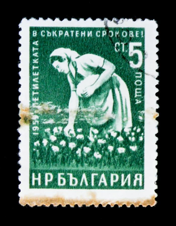 O selo postal de Bulgária mostra a máquina desbastadora de algodão da mulher do trabalhador, conclusão adiantada de um plano de 5 fotografia de stock