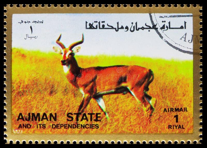 O selo postal impresso em Ajman (Emirados Árabes Unidos) mostra Animal, Mammals, large format serie, por volta de 1973 foto de stock