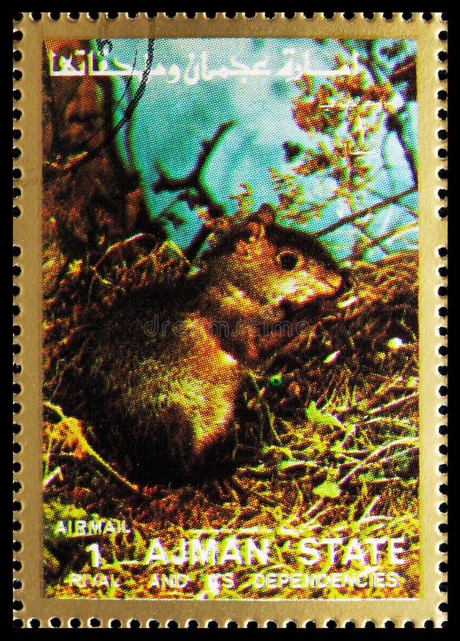 O selo postal impresso em Ajman (Emirados Árabes Unidos) mostra Rodent, Mammals, large format serie, por volta de 1973 imagens de stock royalty free