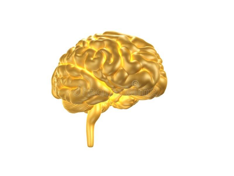 O ser humano dourado skulGolden o cérebro humano ilustração royalty free