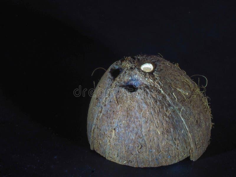 O shell do coco desbastado secado e que tem uma estrutura interessante encontra-se em um fundo escuro foto de stock