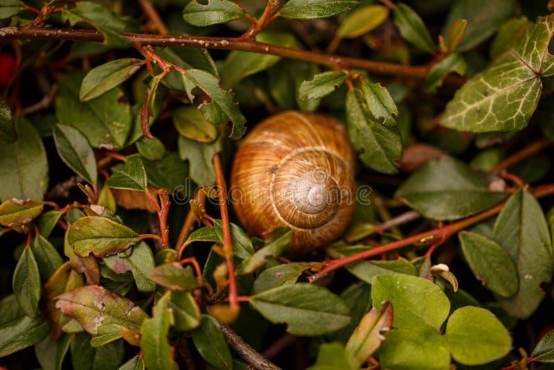 O shell do prego encontra-se na grama foto de stock
