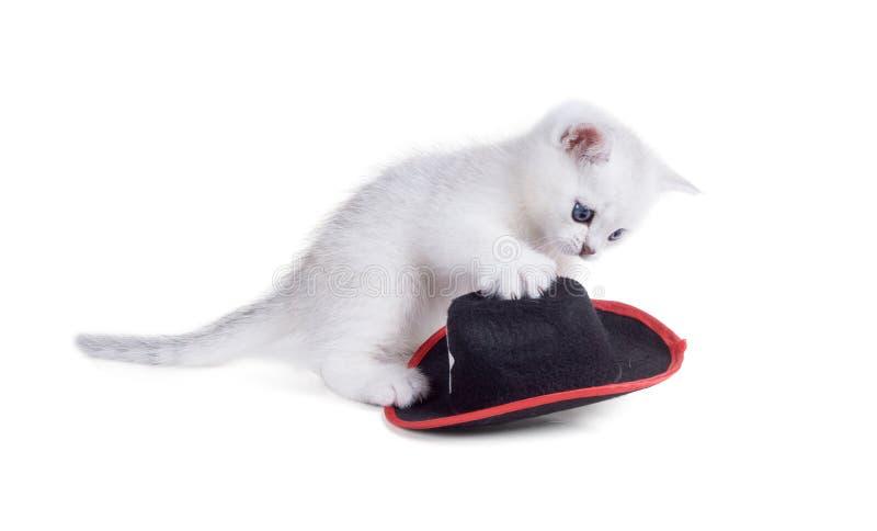 O shorthair britânico do gatinho branco joga com um chapéu Isolado no whi imagem de stock royalty free