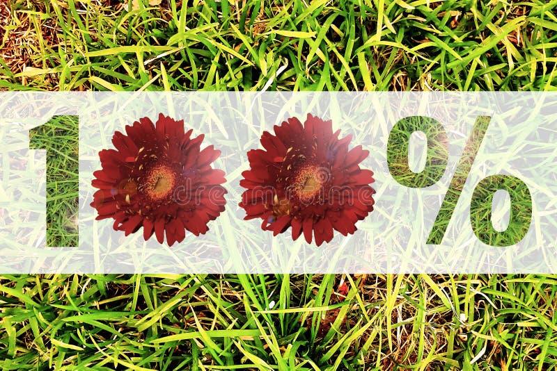 o sinal de 100% fez as flores isoladas no fundo da grama verde imagens de stock