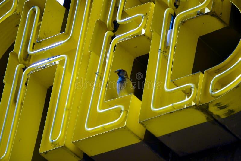 O sinal de néon amarelo com assento do pássaro empoleirou-se altamente acima fotos de stock royalty free