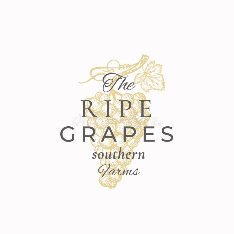 O sinal, o símbolo ou Logo Template abstrato do vetor das uvas maduras Grupo da uva com esboço Sillhouette da folha com elegante ilustração stock