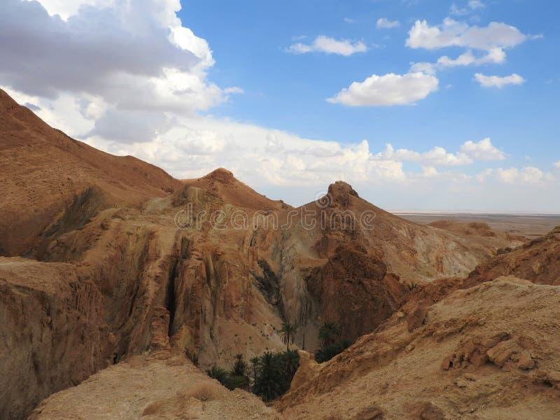 O?sis da montanha de Chebika com as palmeiras no deserto de Sahara arenoso, c?u azul, Tun?sia, ?frica imagens de stock royalty free