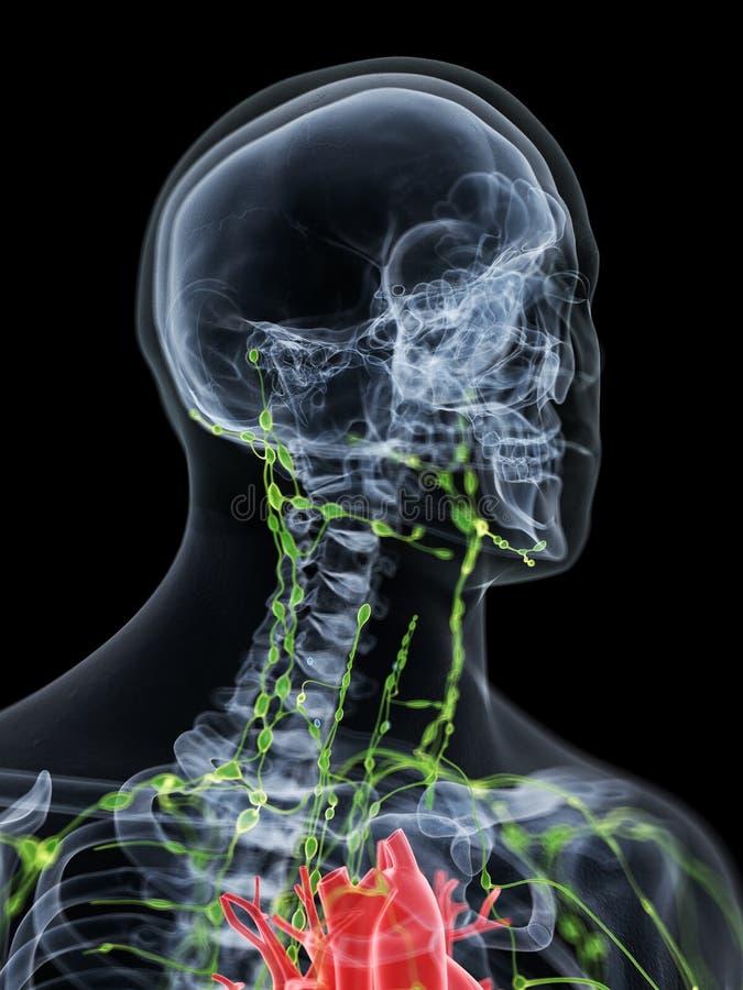 O sistema linfático do pescoço ilustração stock