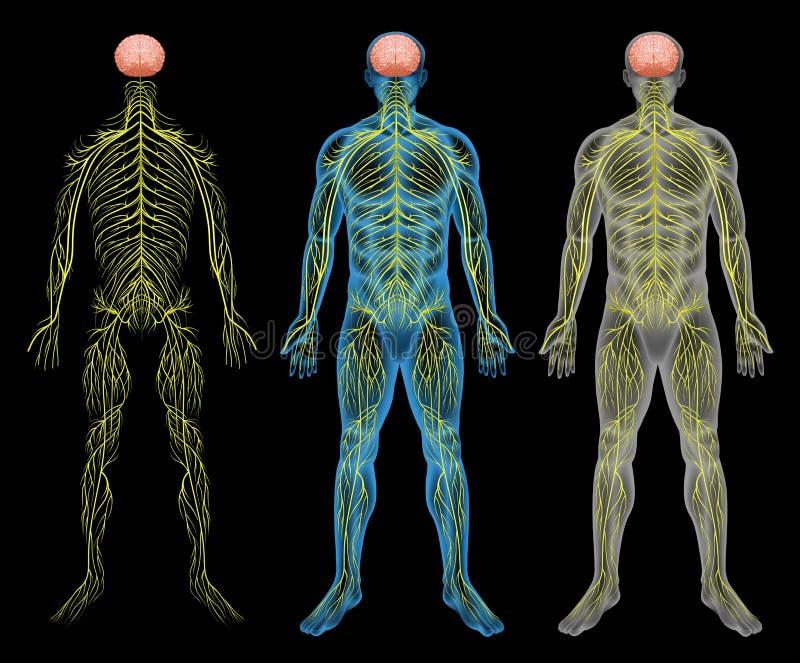 O sistema nervoso ilustração do vetor