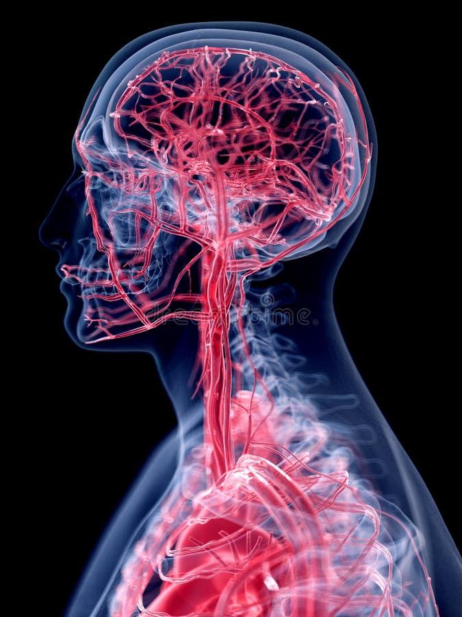 O sistema vascular da cabeça ilustração do vetor