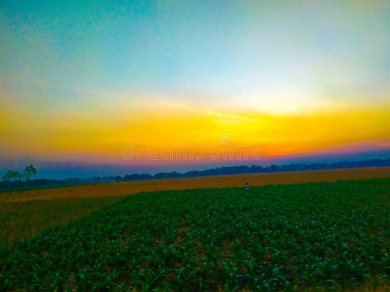 O sol ajusta-se no campo de milho imagem de stock