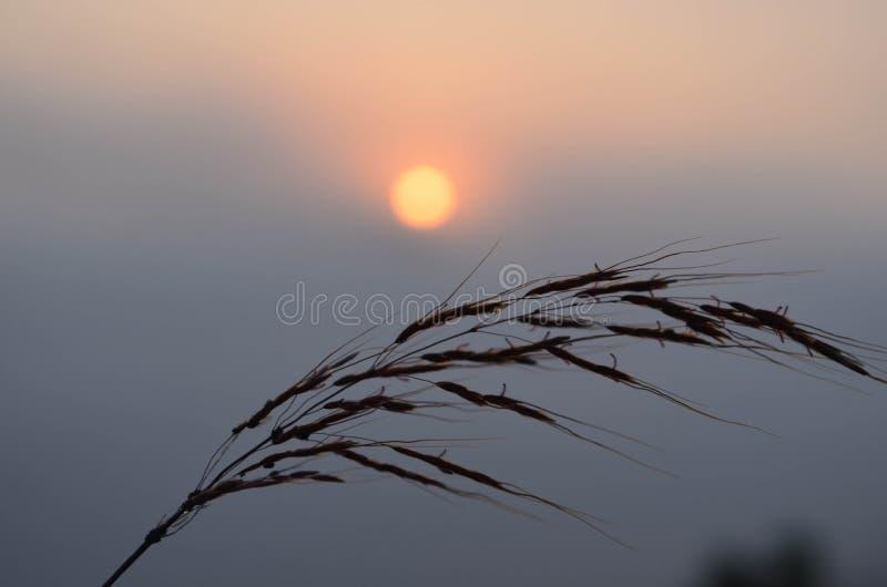 O sol aumenta no leste fotografia de stock royalty free