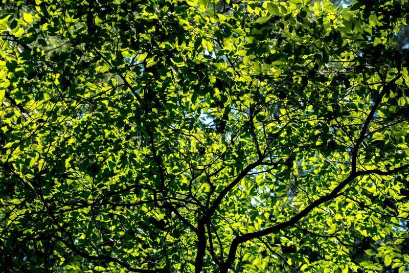 O sol brilha através das folhas imagem de stock