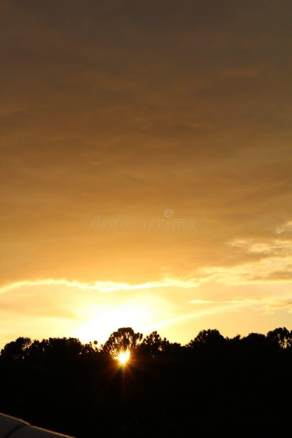 O sol dá a esperança em uma árvore fotos de stock