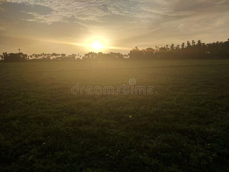 O sol da tarde é muito bonito e calmo em terras cultivadas foto de stock