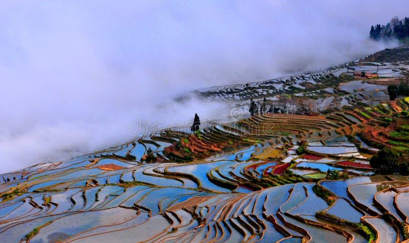 O sol do amanhecer brilha na superfície dos campos terraced, os campos terraced tingiu cinco cores fotos de stock royalty free
