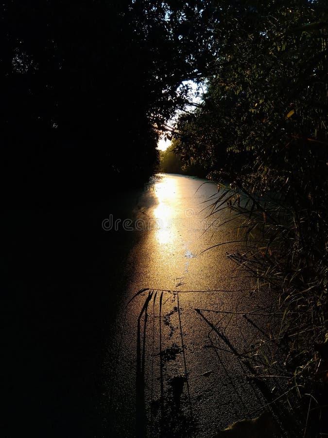 O sol dourado é refletido em um pântano foto de stock royalty free