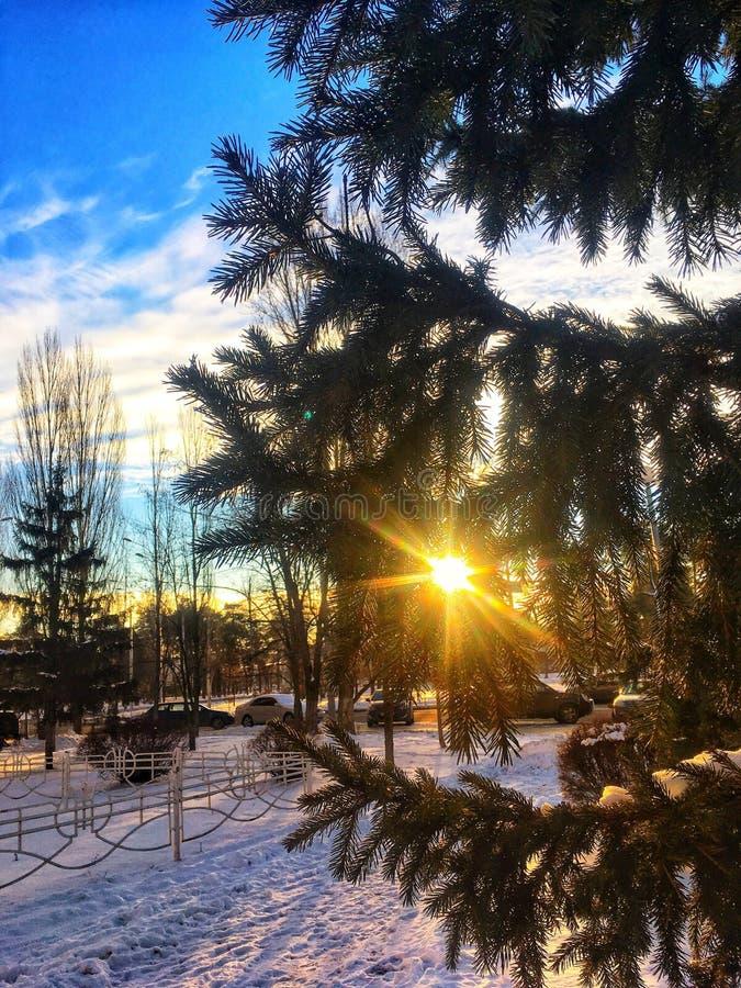 O sol está quebrando através da árvore fotografia de stock royalty free