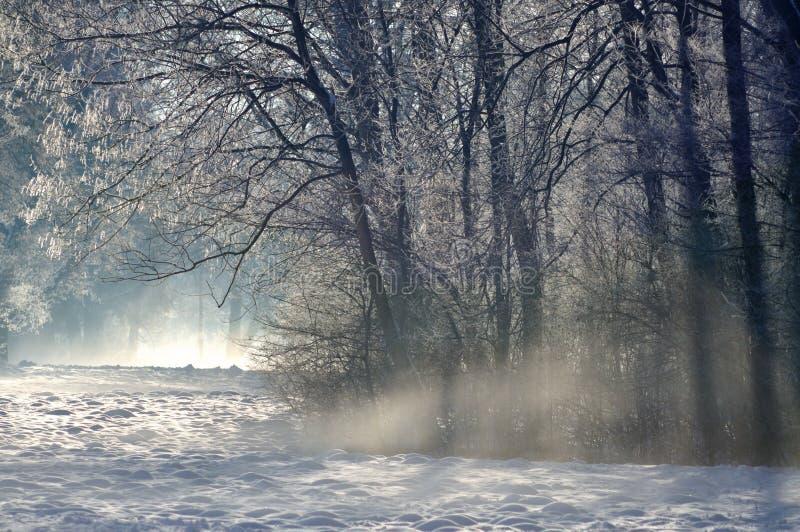 O sol está saindo no inverno fotografia de stock royalty free