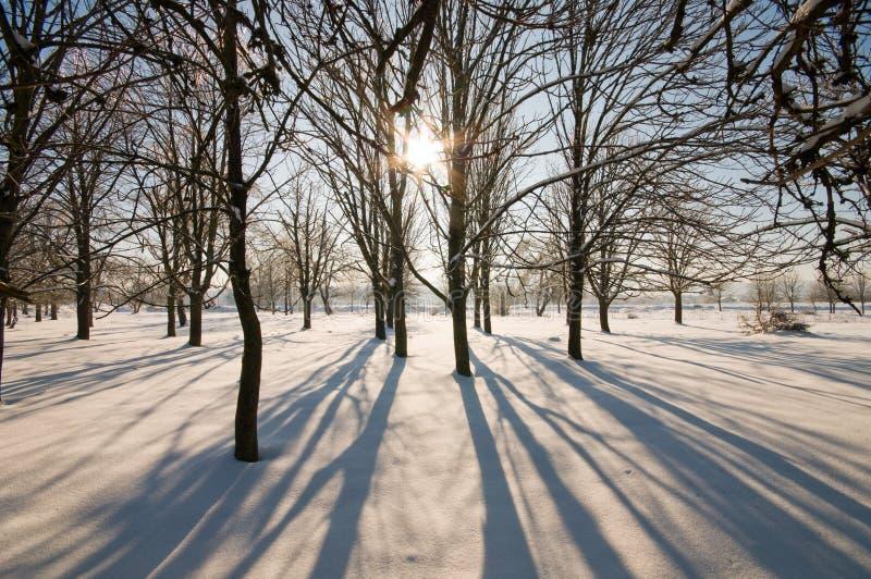 O sol, geada, neve. imagens de stock royalty free