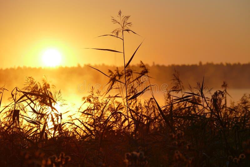 O sol levanta-se acima das nuvens do mar e do ouro fotos de stock royalty free
