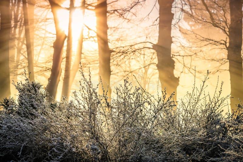 O sol levanta-se acima das nuvens do mar e do ouro fotografia de stock royalty free