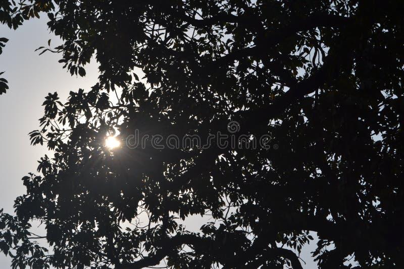 O sol nas folhas fotografia de stock