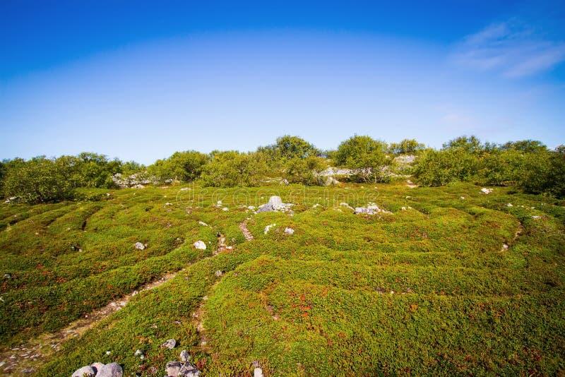 O Solovki, labirintos na ilha de Zayatsky imagens de stock royalty free