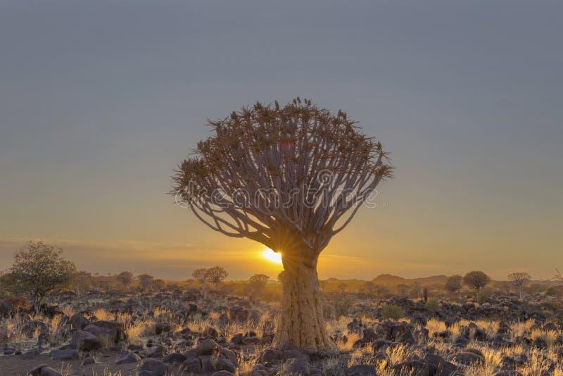 O starburst de Sun no treme a árvore imagem de stock
