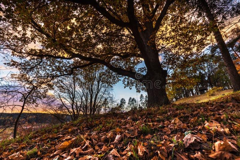 O Sunburst nubla-se e árvore com as folhas coloridas no outono foto de stock