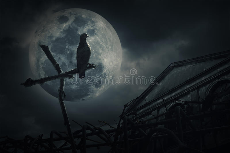O suporte do pássaro na madeira cruza sobre a cerca, castelo velho do grunge, lua e fotos de stock royalty free