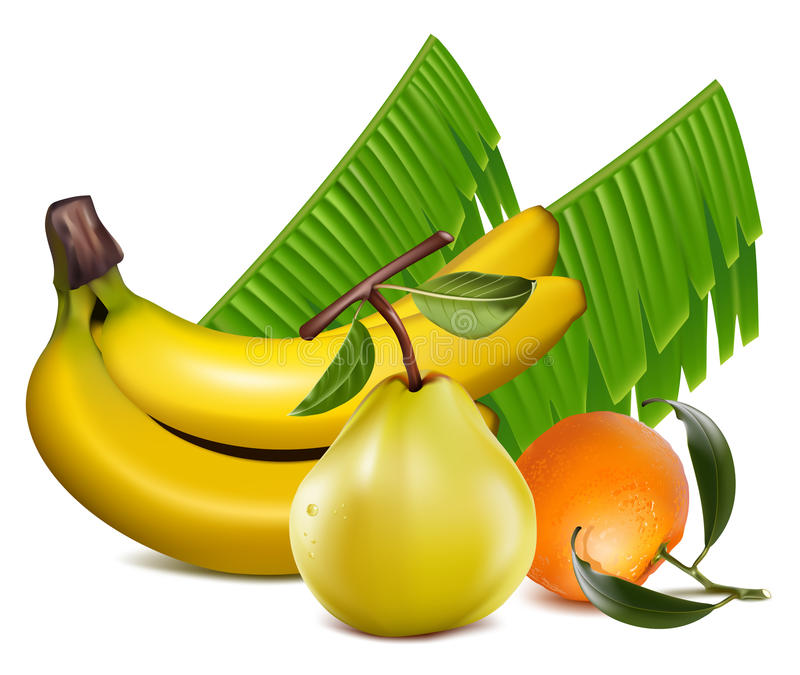 Download O Tangerine Fresco Frutifica Com Folhas Verdes, Banana A Ilustração Stock - Ilustração de citrino, realístico: 12800715
