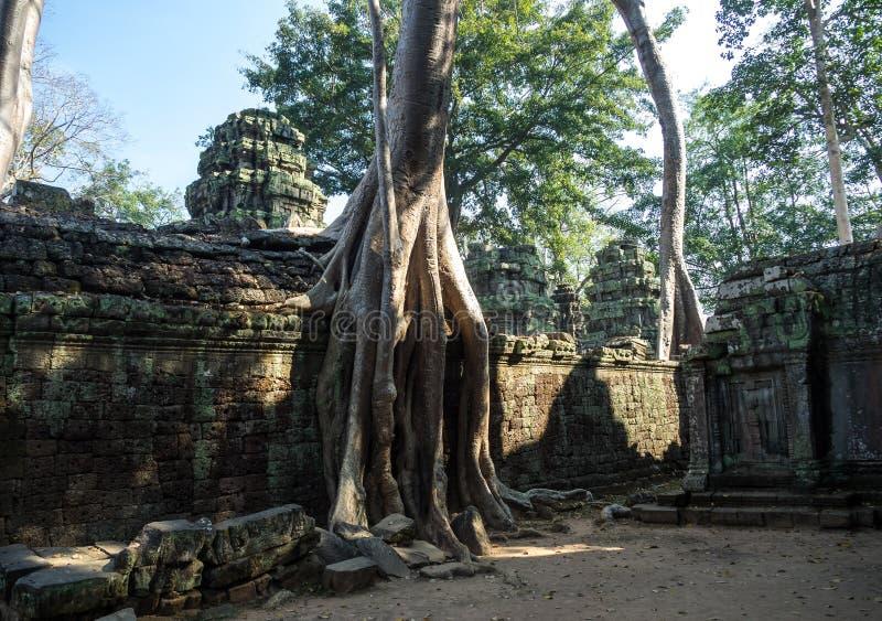 O templo antigo de Ta Prohm, Angkor, Camboja imagens de stock royalty free