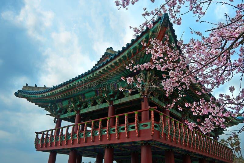 O templo budista em Jeju Coreia com cereja de sakura floresce imagem de stock royalty free