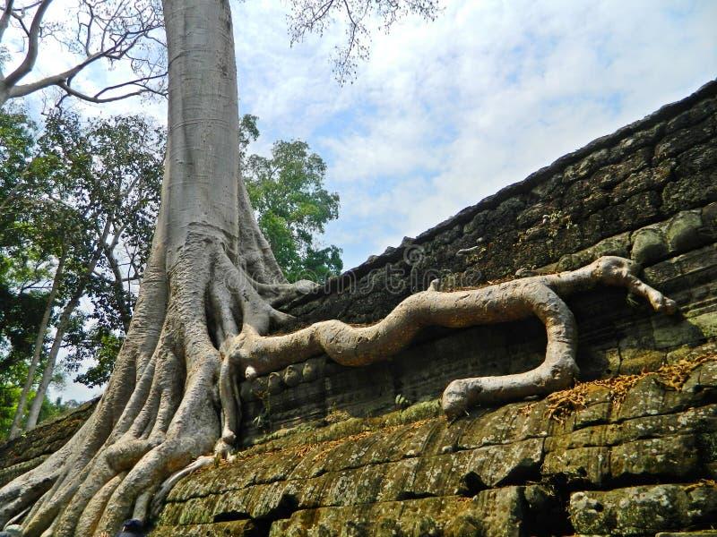 O templo de Ta Prohm - perdido na selva fotografia de stock royalty free