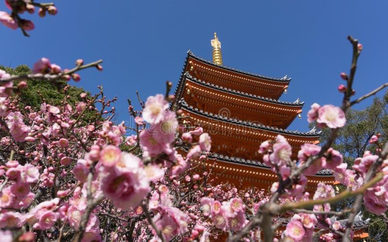 O templo de Tochoji, Ume floresce a florescência em Fukuoka, Japão imagens de stock