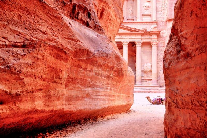 O Tesouraria & o x28; Al Khazneh & x29; de Petra Ancient City com camelo, Jordânia imagens de stock