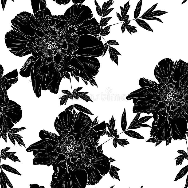 O teste padrão branco preto delicado do jardim das férias de verão da peônia floresce Rosas, peônia, anêmonas e eucalipto, planta ilustração do vetor