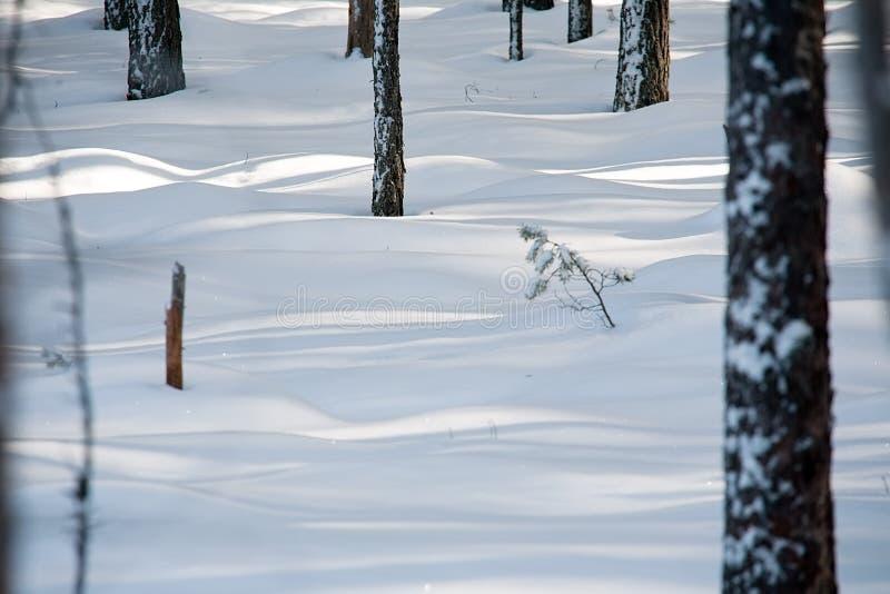 Download Floresta do inverno imagem de stock. Imagem de nave, bole - 29833695