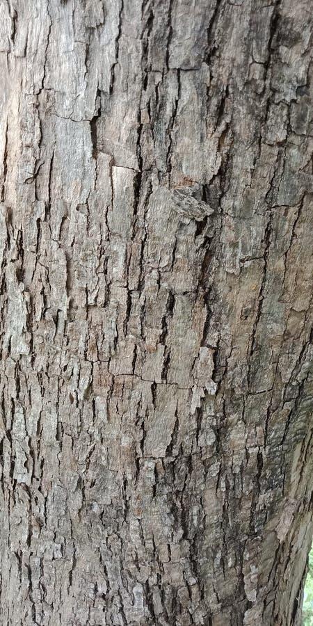 O teste padrão de madeira de superfície do close up na pele rachada velha do tronco da árvore textured o fundo papel de parede do fotografia de stock royalty free