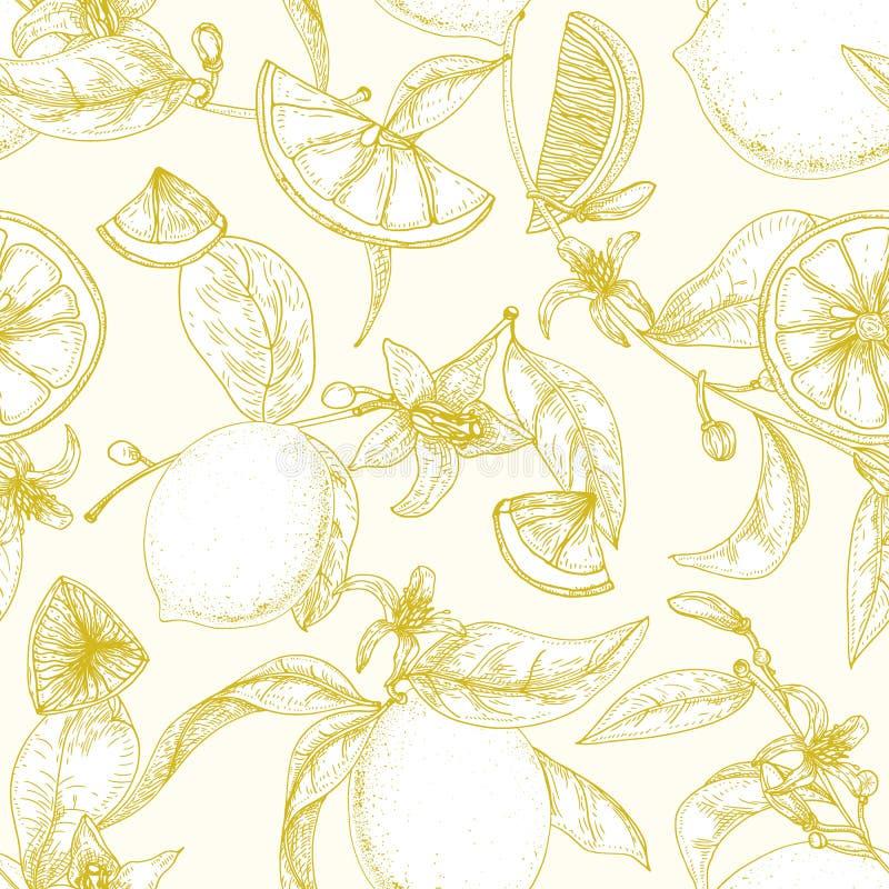 O teste padrão sem emenda botânico com limões maduros, os ramos com flores de florescência e as folhas entregam tirado com linhas ilustração stock