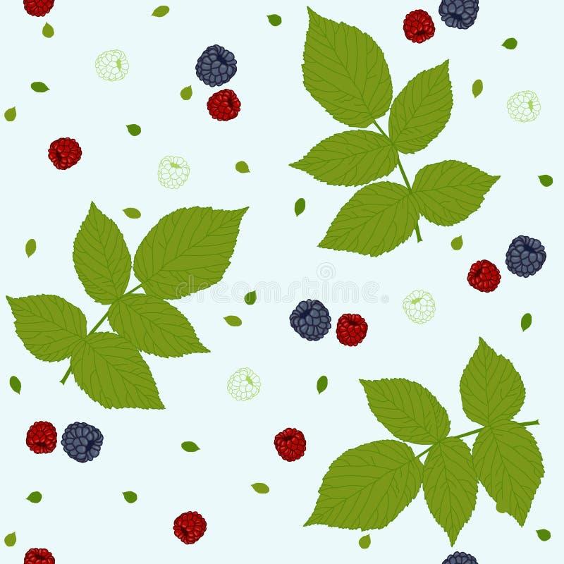O teste padrão sem emenda com framboesas, amoras-pretas e verde sae em um campo branco ilustração stock