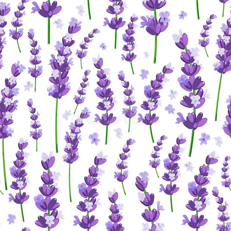 O teste padrão sem emenda da alfazema violeta de provence floresce em um fundo branco Ilustração do vetor ilustração royalty free