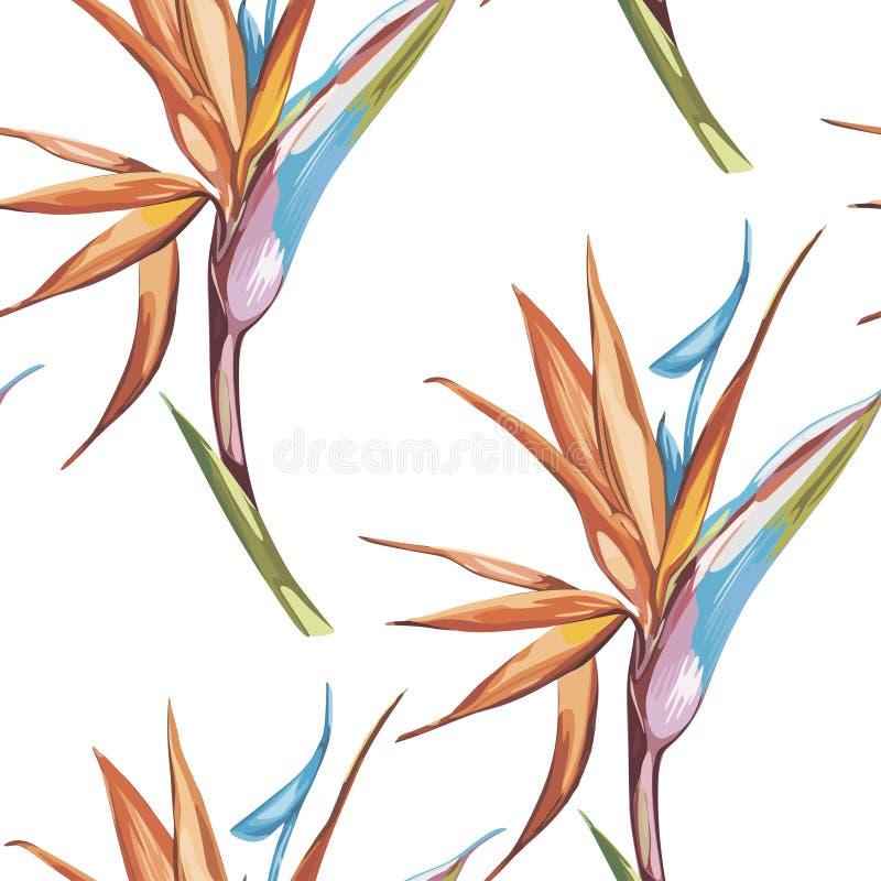 O teste padrão sem emenda da elegância no estilo do vintage com Strelitzia floresce Eps 10 ilustração royalty free