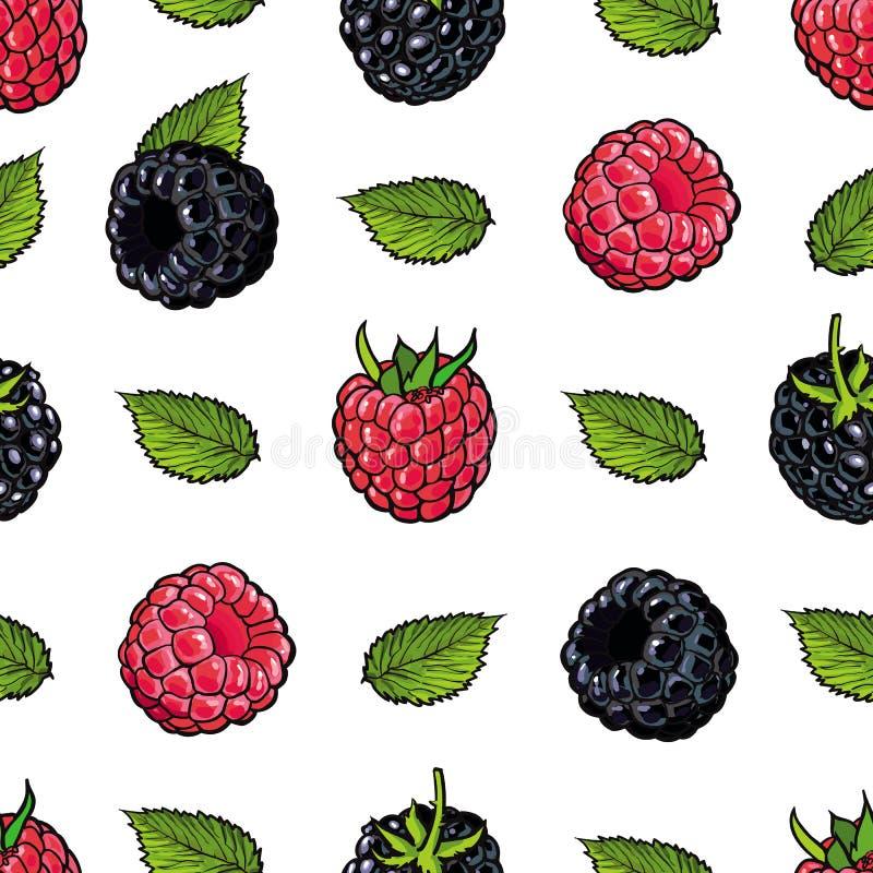 O teste padrão sem emenda da framboesa e da amora-preta com frutos maduros frescos e verde sae no estilo do esboço ilustração royalty free