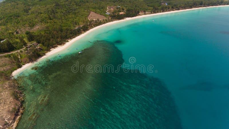 O TIF de Bornéu fotos de stock royalty free